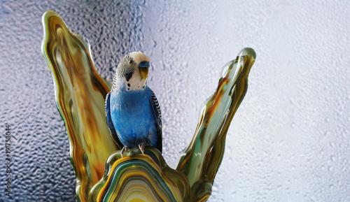 Fotobehang Papegaai Попугай. Фауна