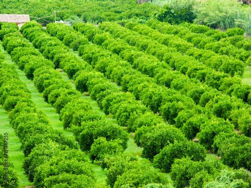 Foto op Canvas Pistache Green rural landscape.