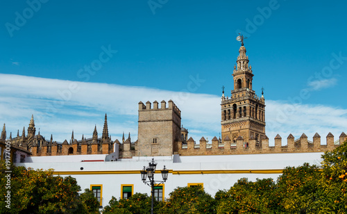 Giralda of Sevilla, views from the Patio de los Naranjos. Beautiful buildings and orange tress with clear blue sky. Famous heritage of Andalusia, Spain.