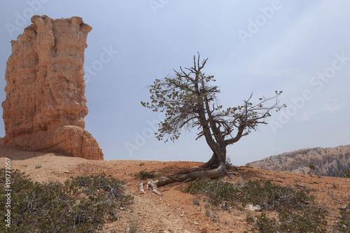 Deurstickers Diepbruine Brice Canyon_Utah_USA