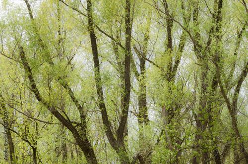 Papiers peints Canada Spring in Toogood Pond Park