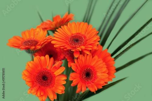 Foto Murales Bouquet of orange gerbera flower.