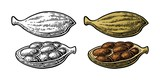 Cardamom spice with seed. Vector vintage engraved - 191791018