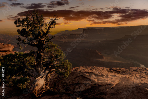 Lone tree over the desert canyon at sunset