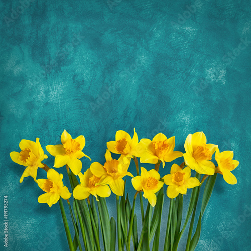 Sticker Amazing background with Yellow flowers daffodils