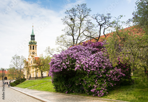Deurstickers Praag Loreta, a monastery located in Hradcany district of Prague, Czech Republic, with the lilac bushes blooming