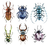 Watercolor beetles collection on a white background. Animal, insects. Entomology. Wildlife. Can be printed on T-shirts, bags, posters, invitations, cards, phone cases, pillows. - 191798245