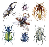 Watercolor beetles collection on a white background. Animal, insects. Entomology. Wildlife. Can be printed on T-shirts, bags, posters, invitations, cards, phone cases, pillows. - 191798271