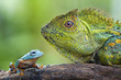 Flying Frog and Dragon Forest