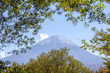 Mont fuji seen from Jukai Forest - 191817031