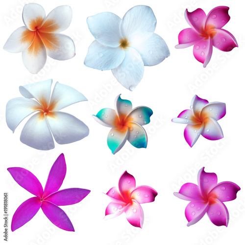 Fotobehang Plumeria fleurs de frangipanier