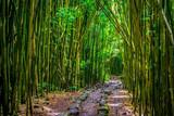 Pipiwai trail bamboo - 191819693