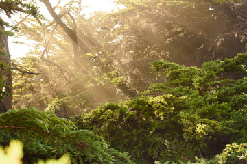 light beaming through the forest © MikeFusaro