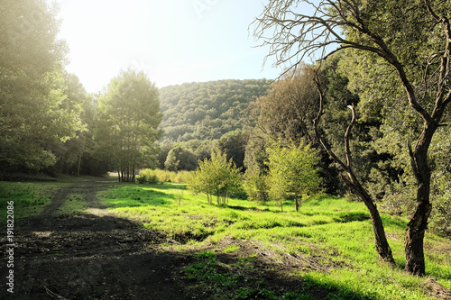Foto Murales Sunlight In A Green Glade Of Etna Park, Sicily