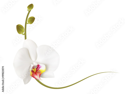 Realistic white orchid frame, corner. - 191823874