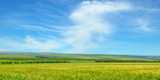 Green field and blue sky with light clouds. Wide photo. - 191830040