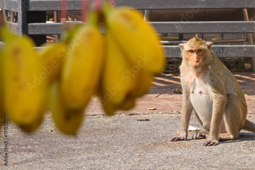 Fotobehang Aap Monkey looking at a bananas with hope. Depth of field forground.