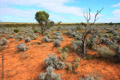 Foto op Canvas Oranje eclat Australian outback on the Nullarbor