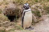 Penguin - 191834863