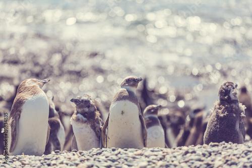 Fotobehang Galyna A. Penguin