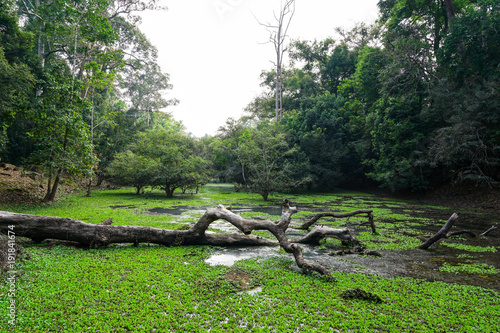 Fotobehang Zwart Green vegetation covering a lake around temple in Cambodia