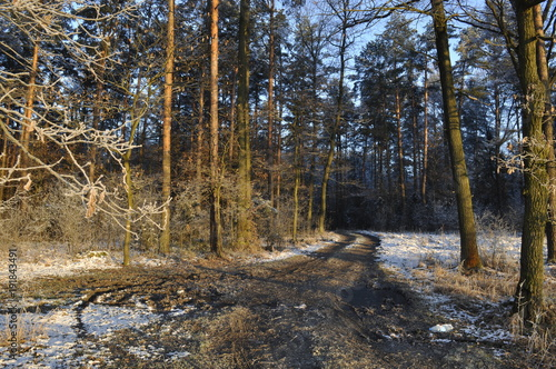 Fotobehang Weg in bos Piękno lasu