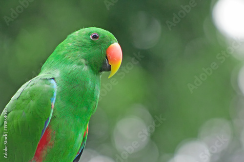 Severe Macaw perching on a branch
