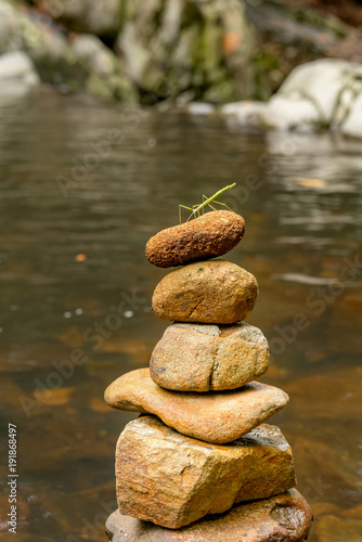 A green stick insect stands upon a rock stack in the Gold Coast hinterland. Zen rock stack with green stick insect.