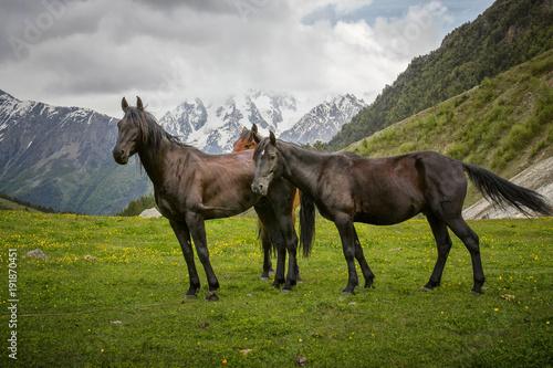 Fotobehang Bergrivier Пастбище в горах
