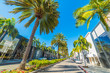 Palm trees in Rodeo Drive