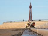 Blackpool Donkeys - 191887476