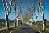 une route bordée d'arbre blancs et sans feuille - 191894082
