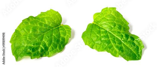 Fotobehang Verse groenten fresh apple mint leaves isolated on white