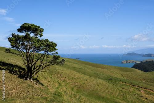 Lonly tree in New Zealand
