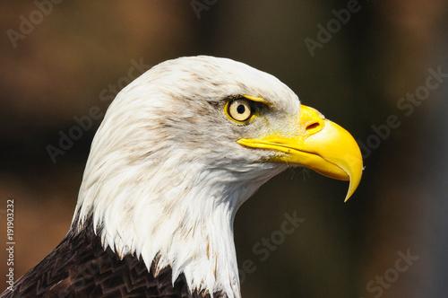 Aluminium Eagle american eagle