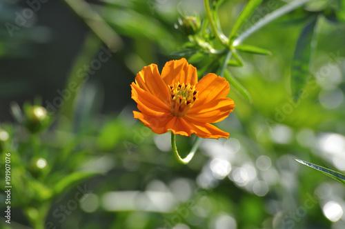 Aluminium Bee flor