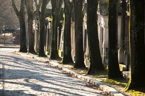 Fotobehang Weg in bos arbre cimetière