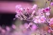 Quadro Blume