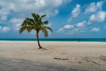 Aruba island tropical beach in the Caribbean sea in the Netherlands Antilles