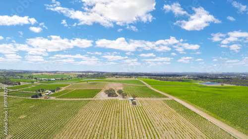 Foto op Plexiglas Wijngaard Drone aerial of the Barossa Valley, major wine growing region of South Australia, views of rows of grapevines and scenic landscape.