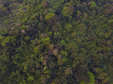 Flying above Forest with houses, top view of lush trees