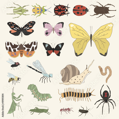 Illustration of bugs and insects