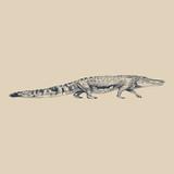 Illustration of drawing crocodile