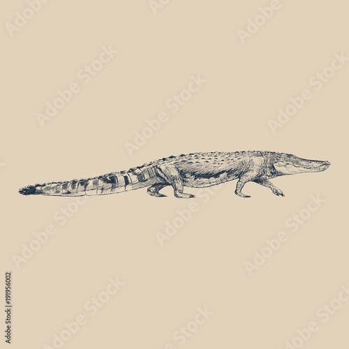 Foto op Canvas Hoogte schaal Illustration of drawing crocodile