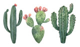 Watercolor vector set of cacti and succulent plants isolated on white background. - 191958665