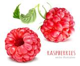 Raspberries. Vector illustration.