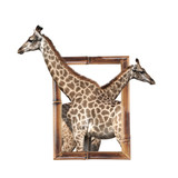 Two giraffes in bamboo frame with 3d effect