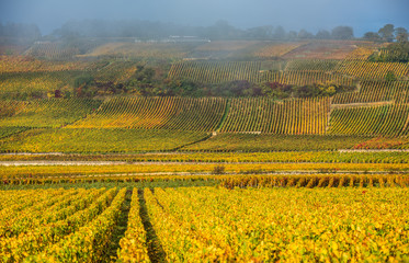 Vineyards in the foggy autumn morning, Burgundy, France