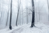 Beautiful tree in winter foggy forest - 191960847