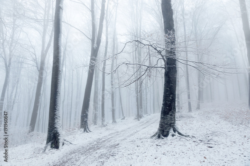 Canvas Betoverde Bos Beautiful tree in winter foggy forest